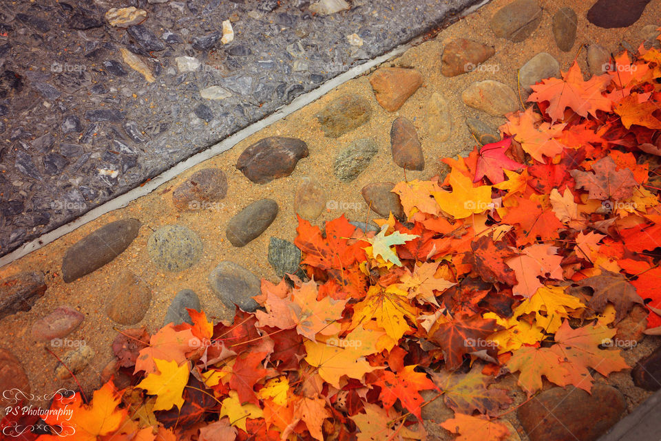 autumn leaves. cobblestone street filled with autumn leaves