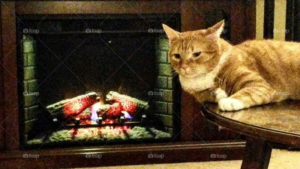 Fall Fireplace and Whitey