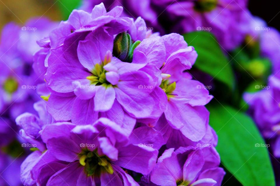 purple flower spring Greece nature