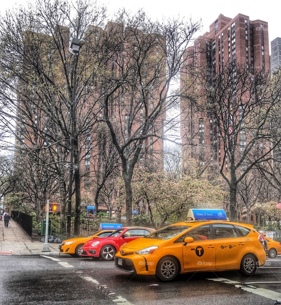 Bare trees and NYC taxi