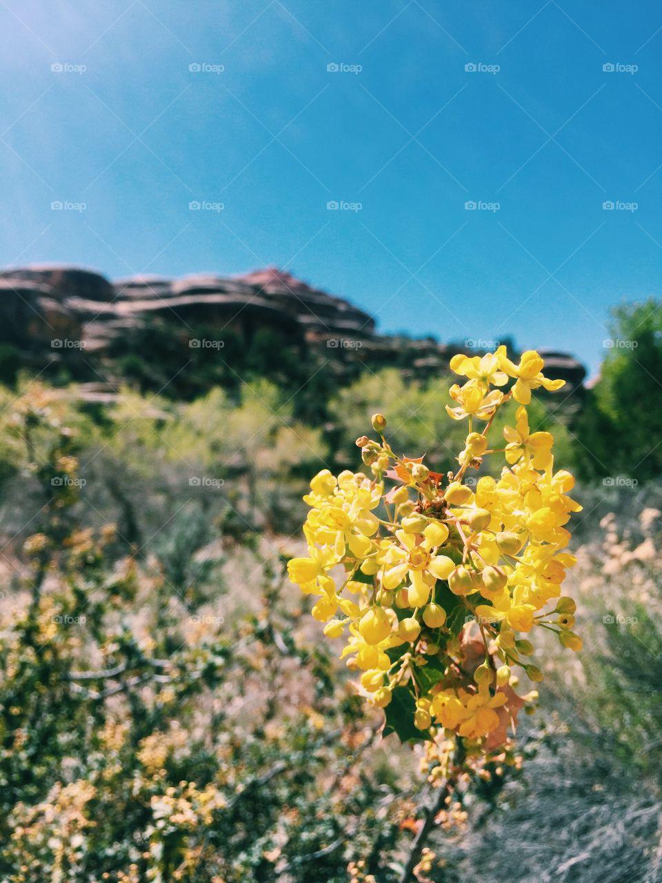 Mellow yellow at Canyonland, Utah