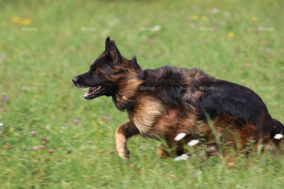Dog, Canine, Mammal, Grass, Animal
