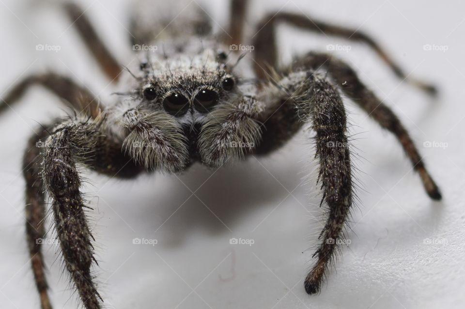 Extreme close-up of tarantula