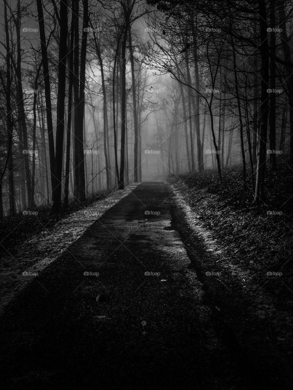 A dark and haunting image of a path through the foggy forest. Gearing up for Halloween. Tims Ford State Park in Winchester Tennessee.