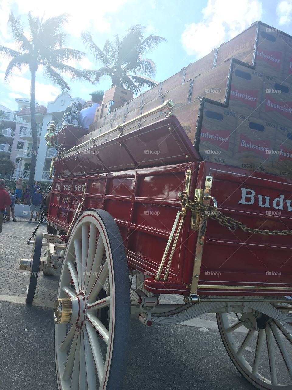 Budweiser wagon Clydesdale parade