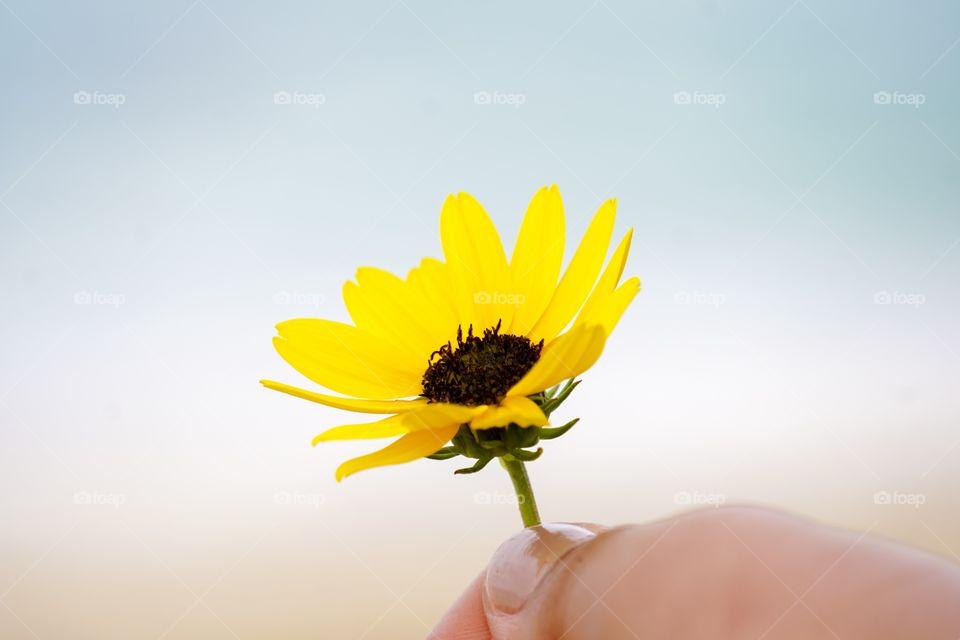 Giving away yellow flower.