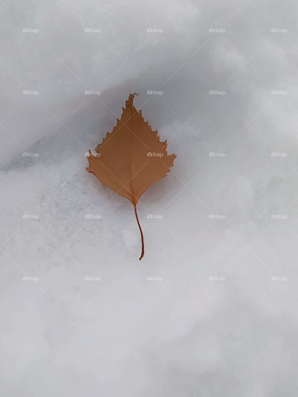 brown dead leaf