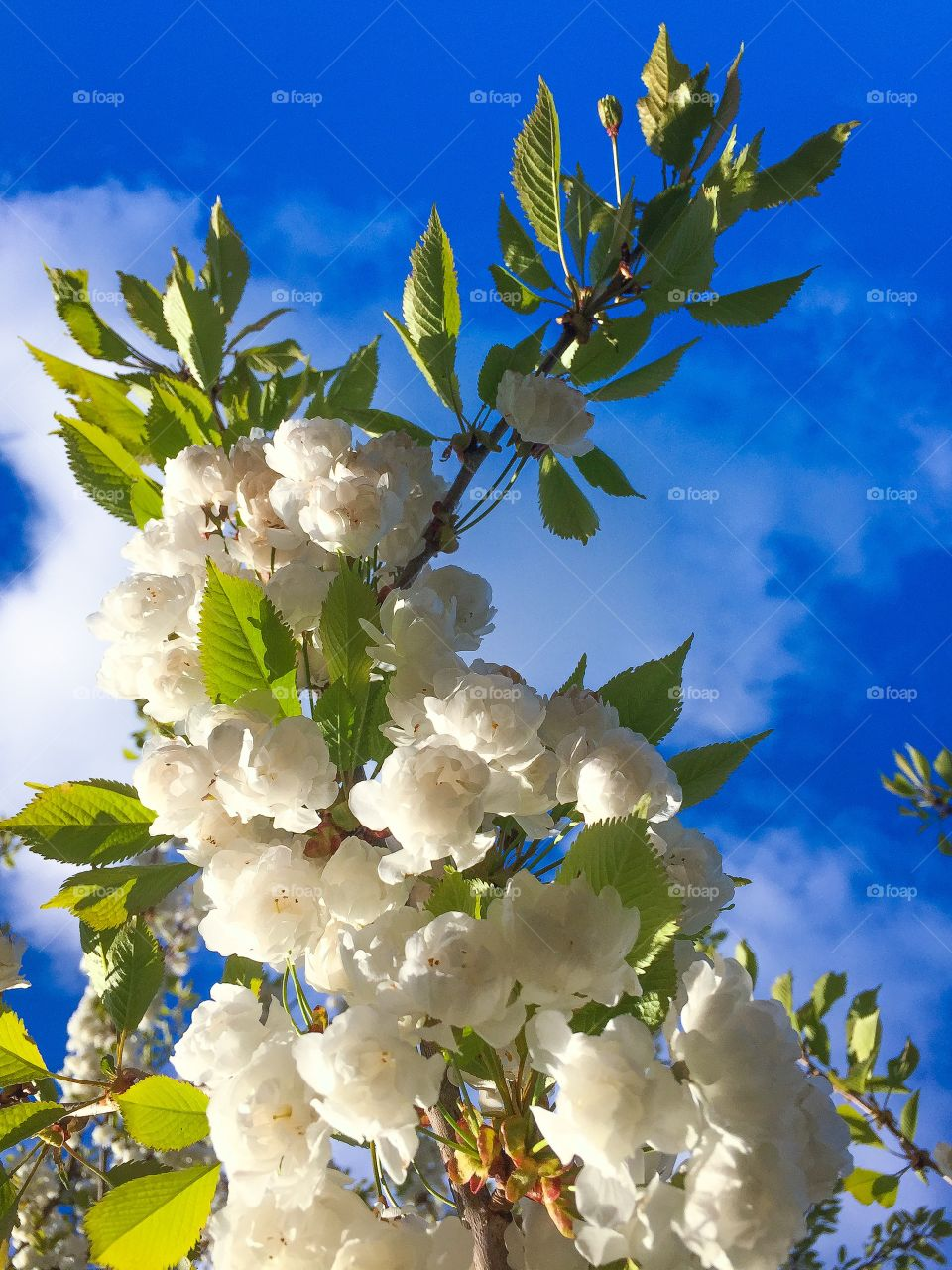 Flower in the sky. Flower in the sky