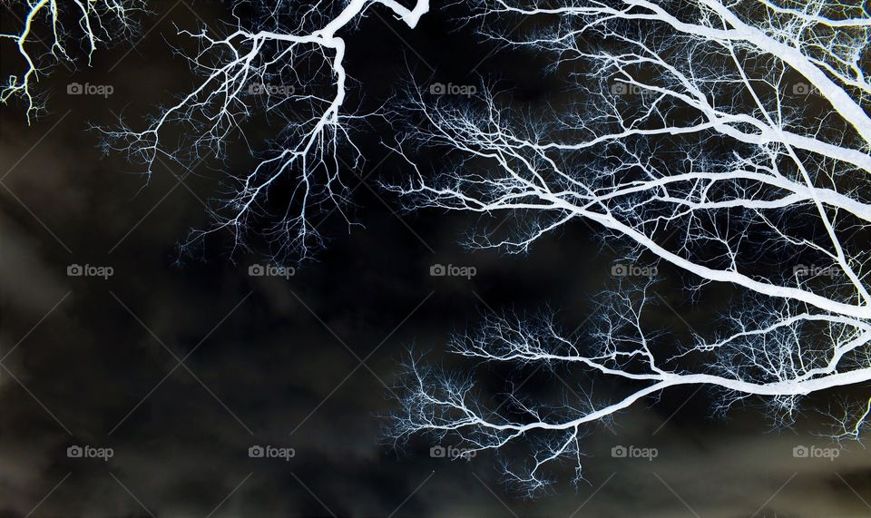 Black Sky and Thunder by Bare Trees ⚡️