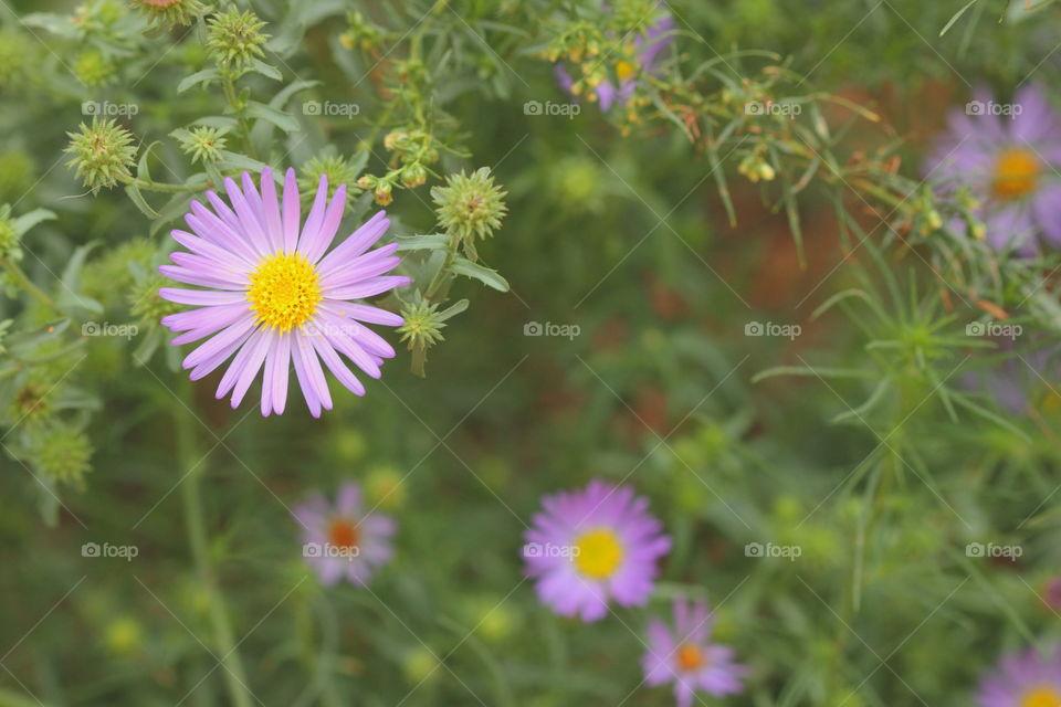 Purple Flower on green plant