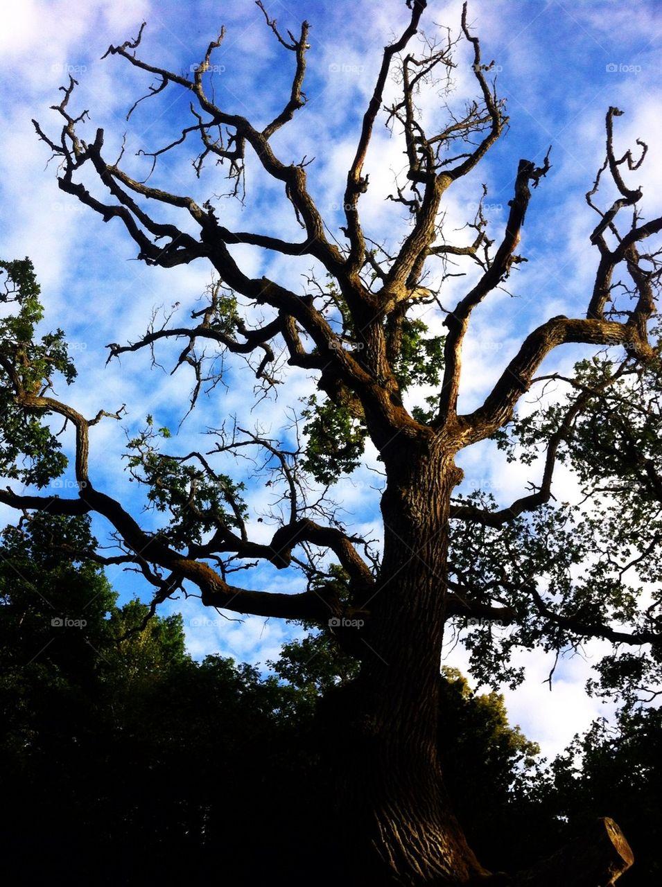 sky blue tree oak by stelkth