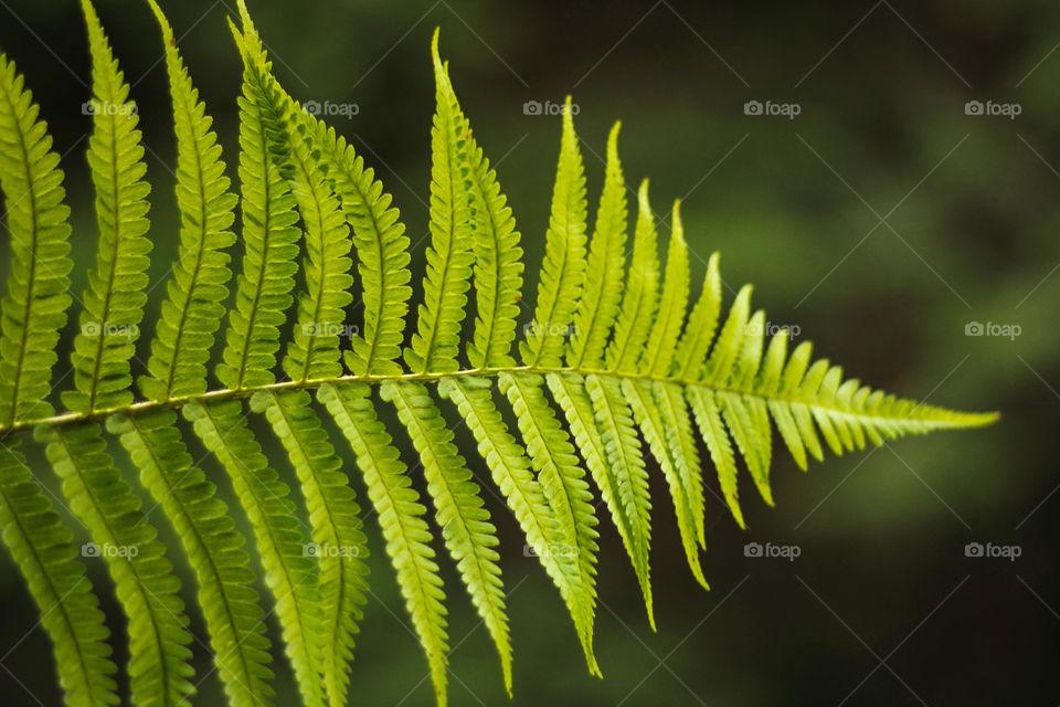 Natural light on the fern leaf