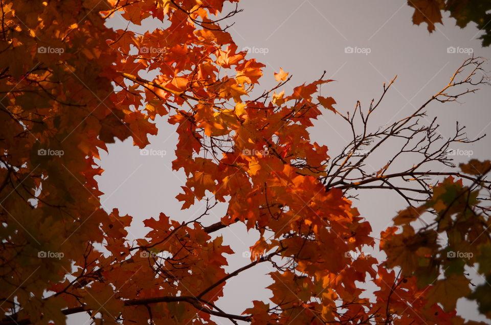 Sun Tickled Autumn Leaves
