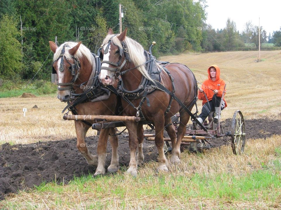 big team plowing