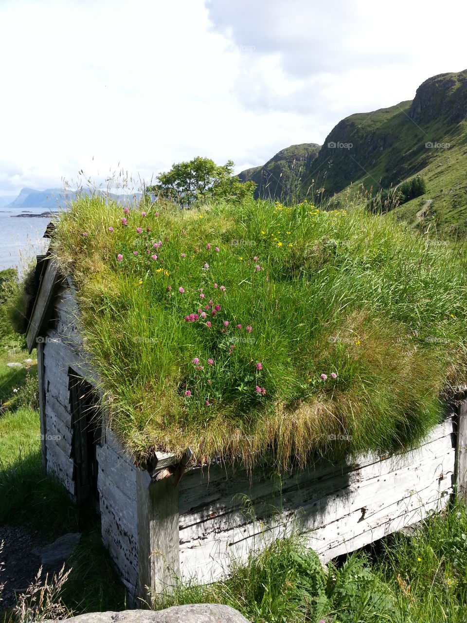 Summer vacation in Norway Runde island.