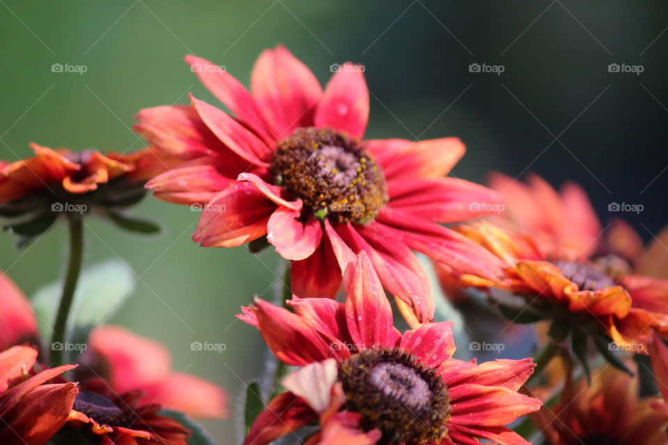 Deep Fall Colors