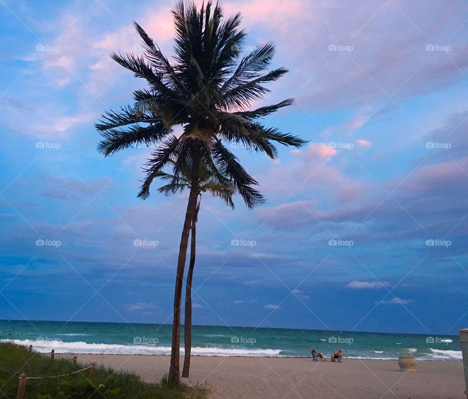 Miami beach sunset and palm trees at the ocean