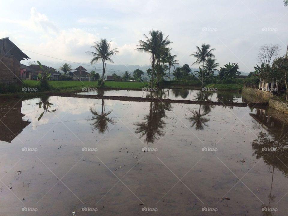 Water, Tree, No Person, Daylight, Landscape