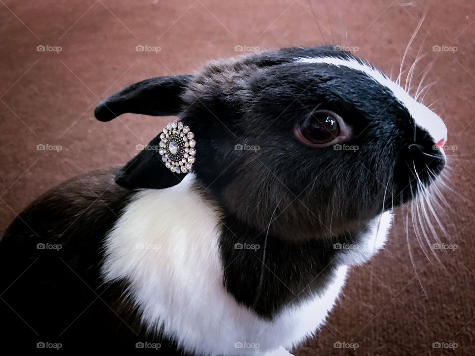 Baby bunny with pendant