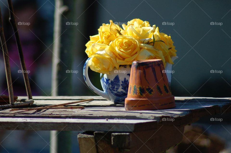 Mellow yellow. Yellow roses on display