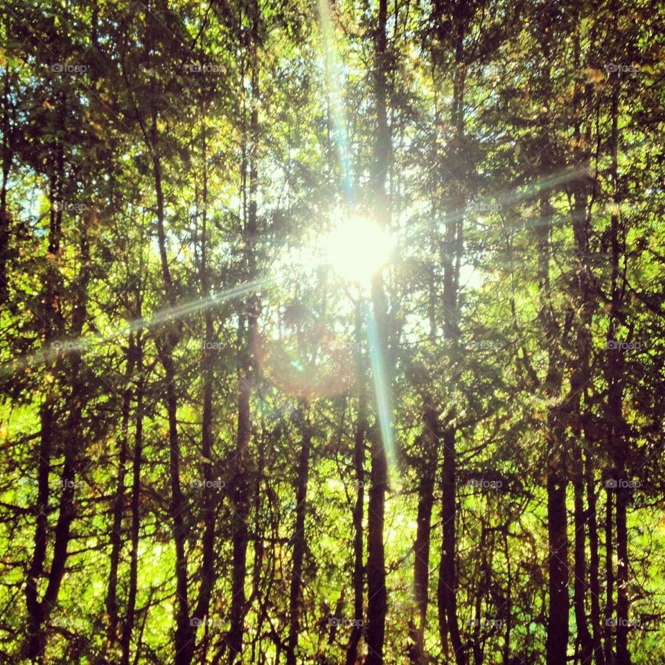 Forest and sun. trees in a beautiful lesu.solntse peeps through the branches