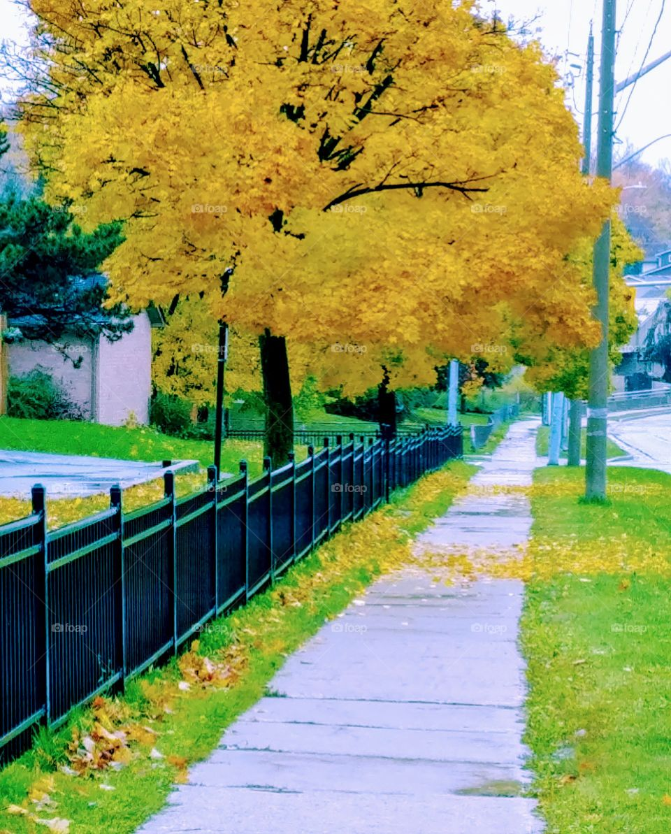 Autumn Colours Down The Sidewalk.