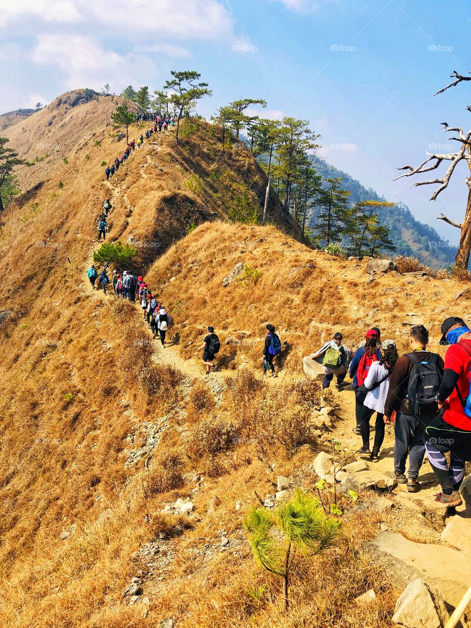 Mt. Ulap is a long hike compared to your usual one. You need more than just strength and stamina to climb up and go down, you need patience. Ulap shouldn't be that hard for experienced hikers and mountaineers. I survived Mt. Ulap! ⛰️💪 (1846 MASL)