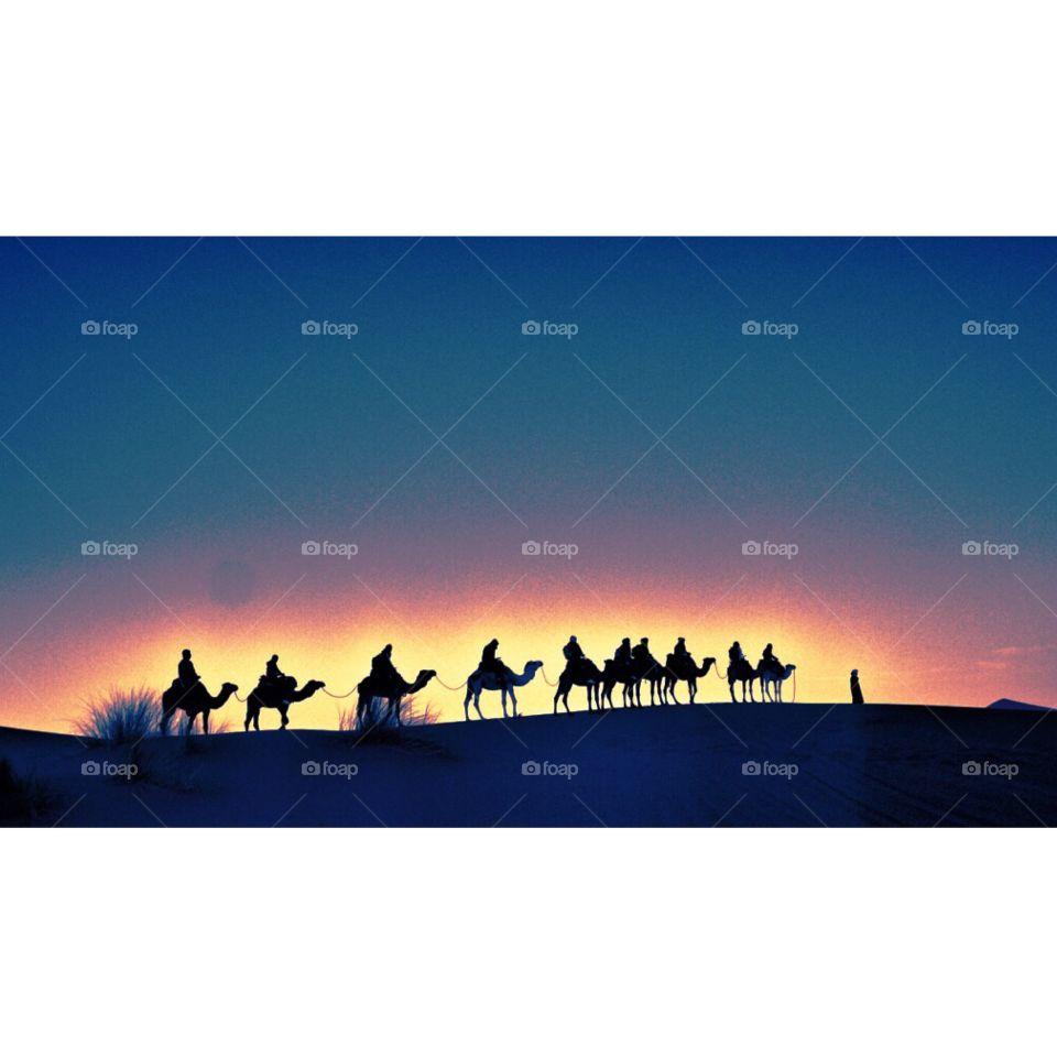 Sunset Camel Train, Sahara Desert, Morocco . Sunset Camel Train, Sahara Desert