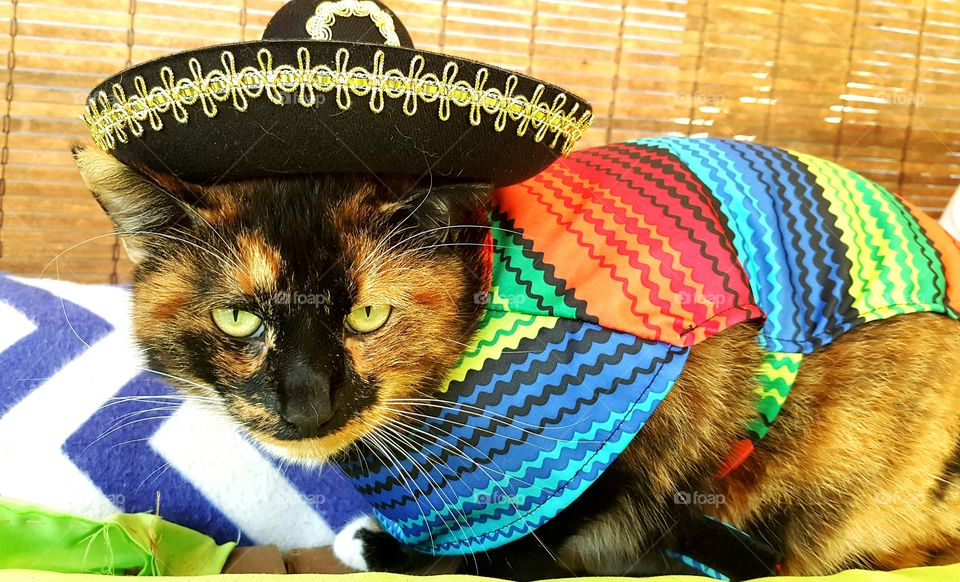Her name is Cinco so the Mexican theme fits her just right, but she does not seem amused.