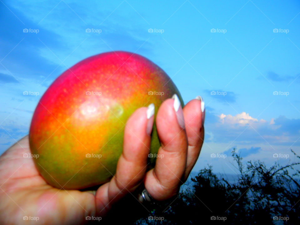Fresh!! just cut from the tree , mango