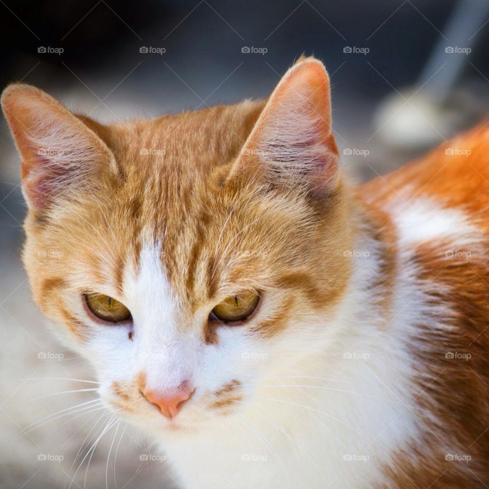 summer orange cat shadows by antwon_nbd