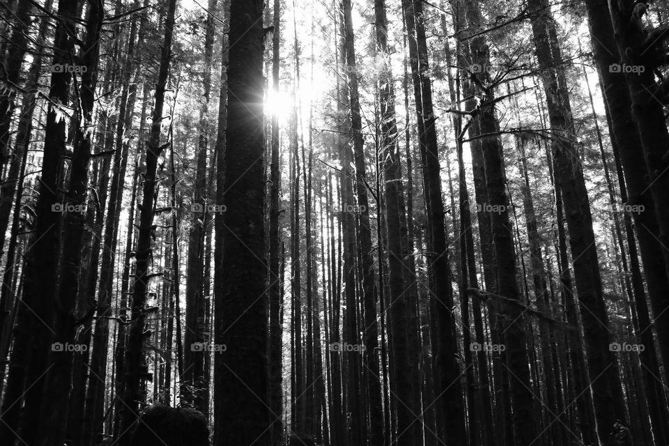 Dense woods, yet the sun getting through