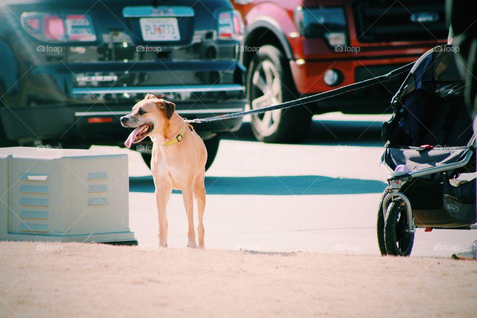 Walking dog 🐶