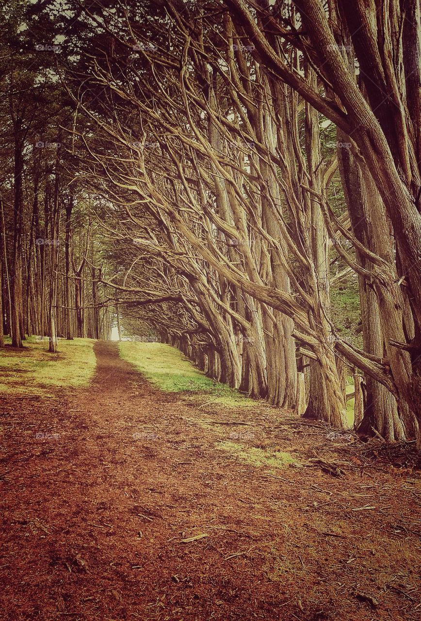 wood | tree, landscape, no person, nature