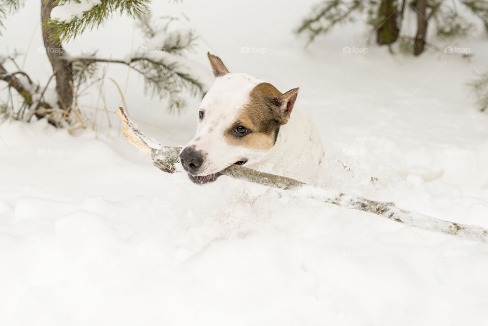 dog with a stick in the snow