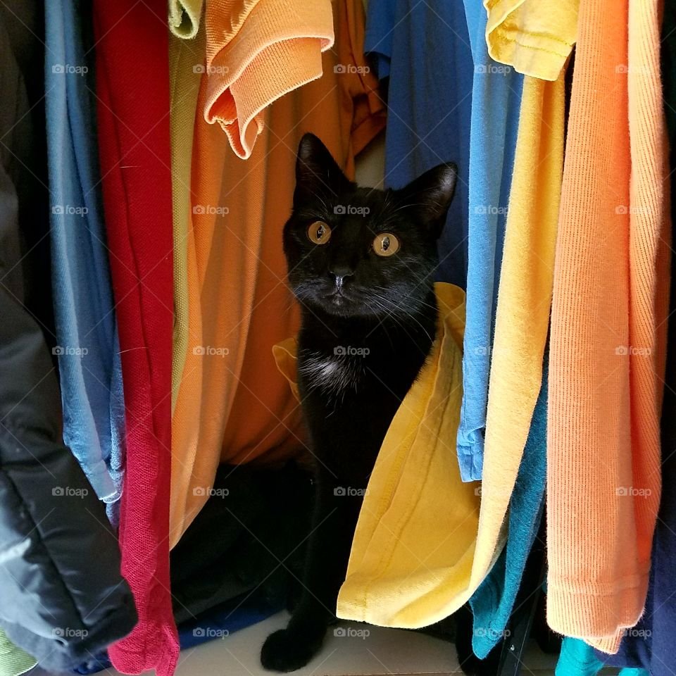 black cat and bright colors