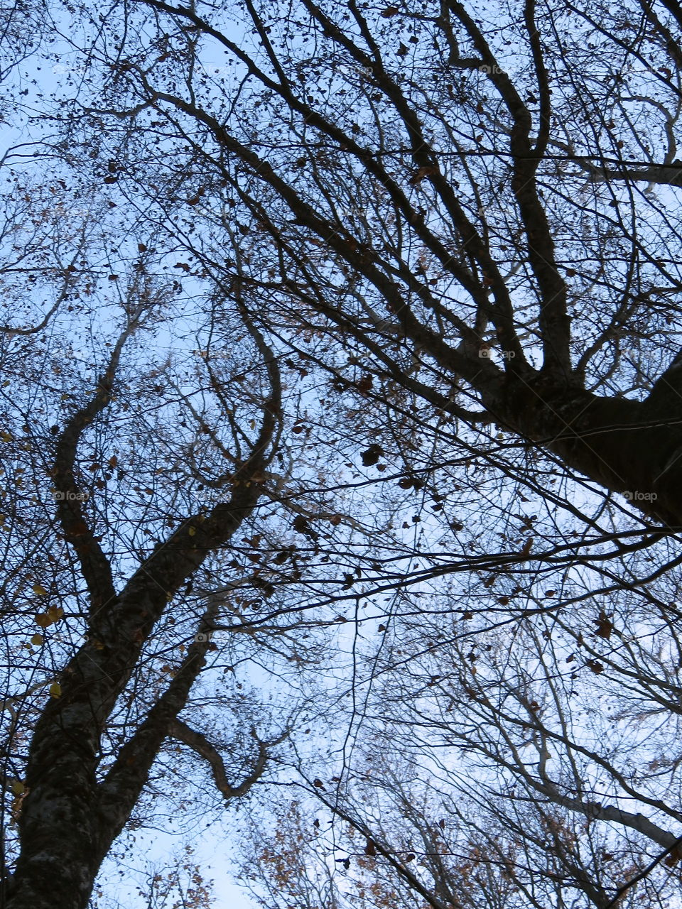 view through the treetops from the bottom To the top