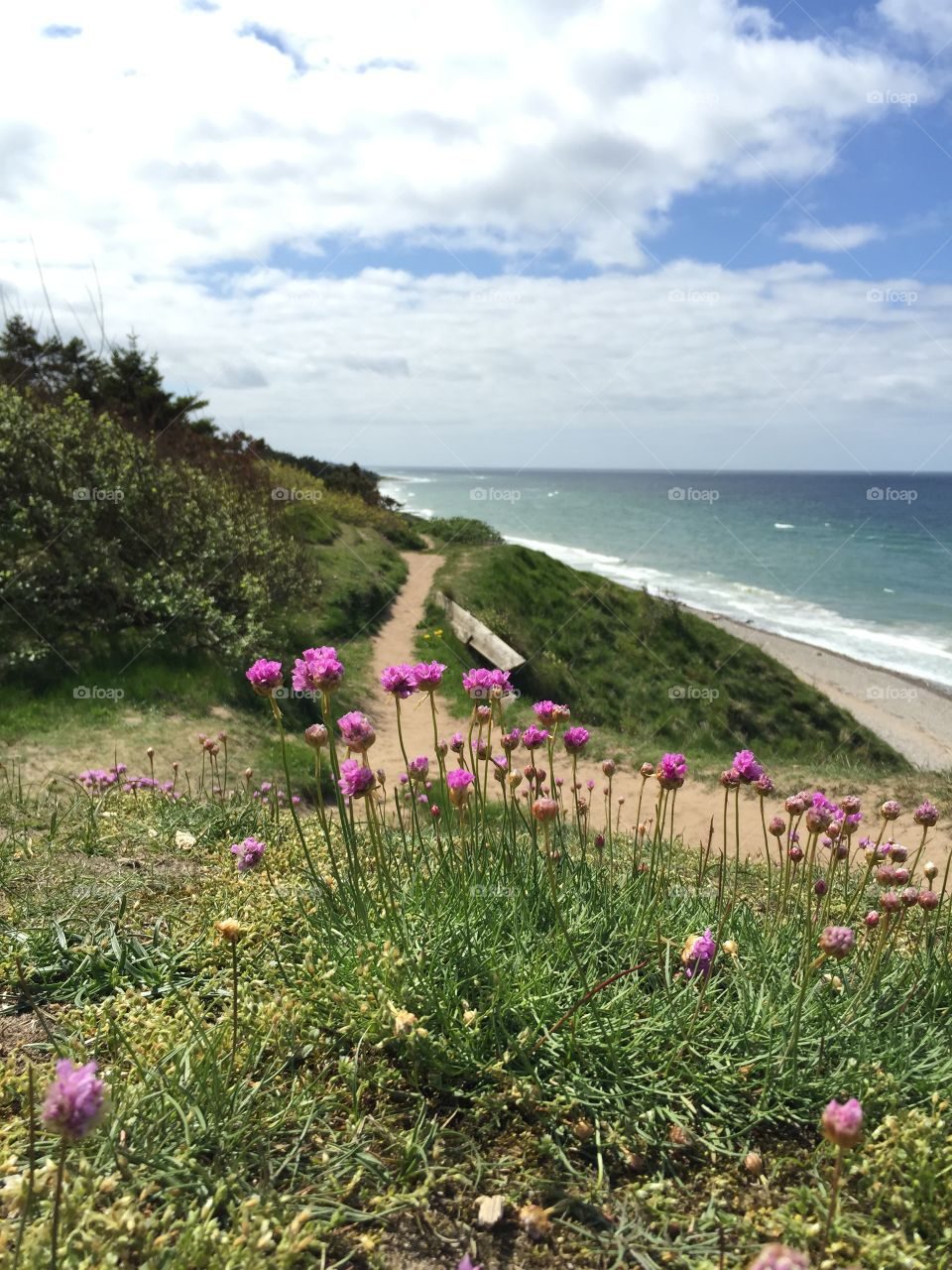 Spring in Denmark. Gilleleje coast