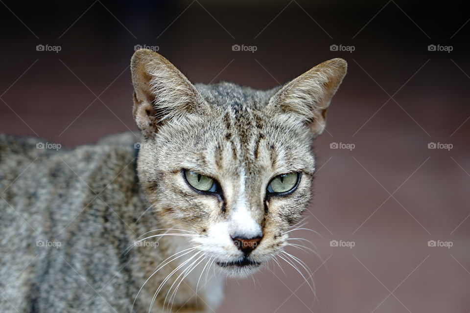 face of the cat