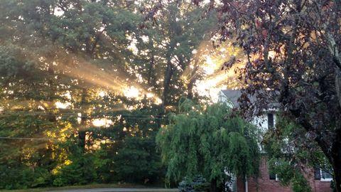 Sunlit trees. Sun light through the trees.