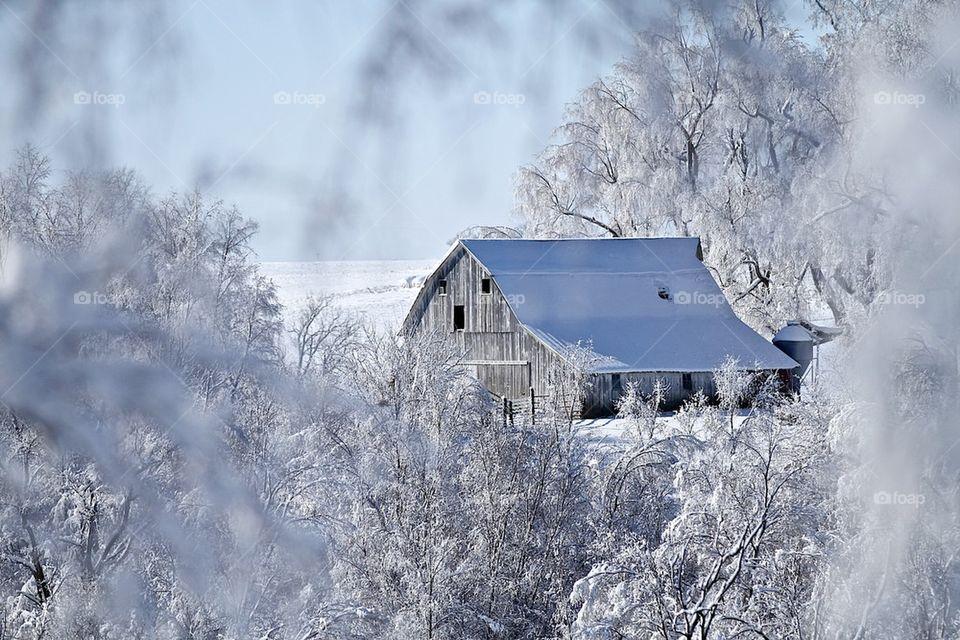 Frozen barn roof in winter