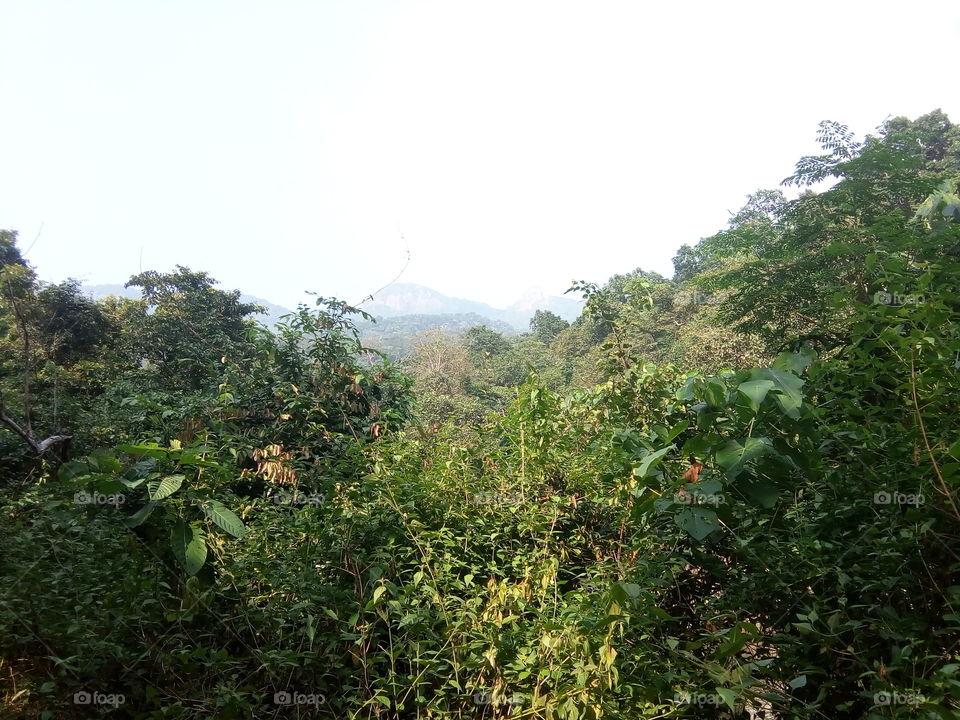 landscape 2017-10-21  005  devkund simlipal  #আমার_চোখে #আমার_গ্রাম #nature #landscape