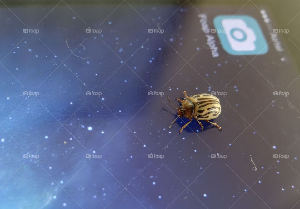 Mobile app alpha bugs