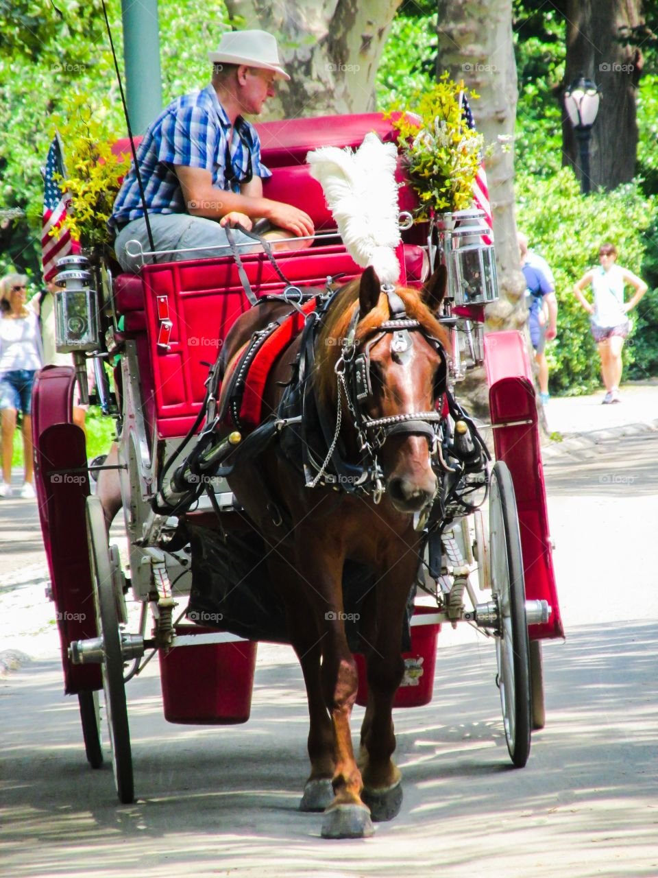 Horse & Buggy Central