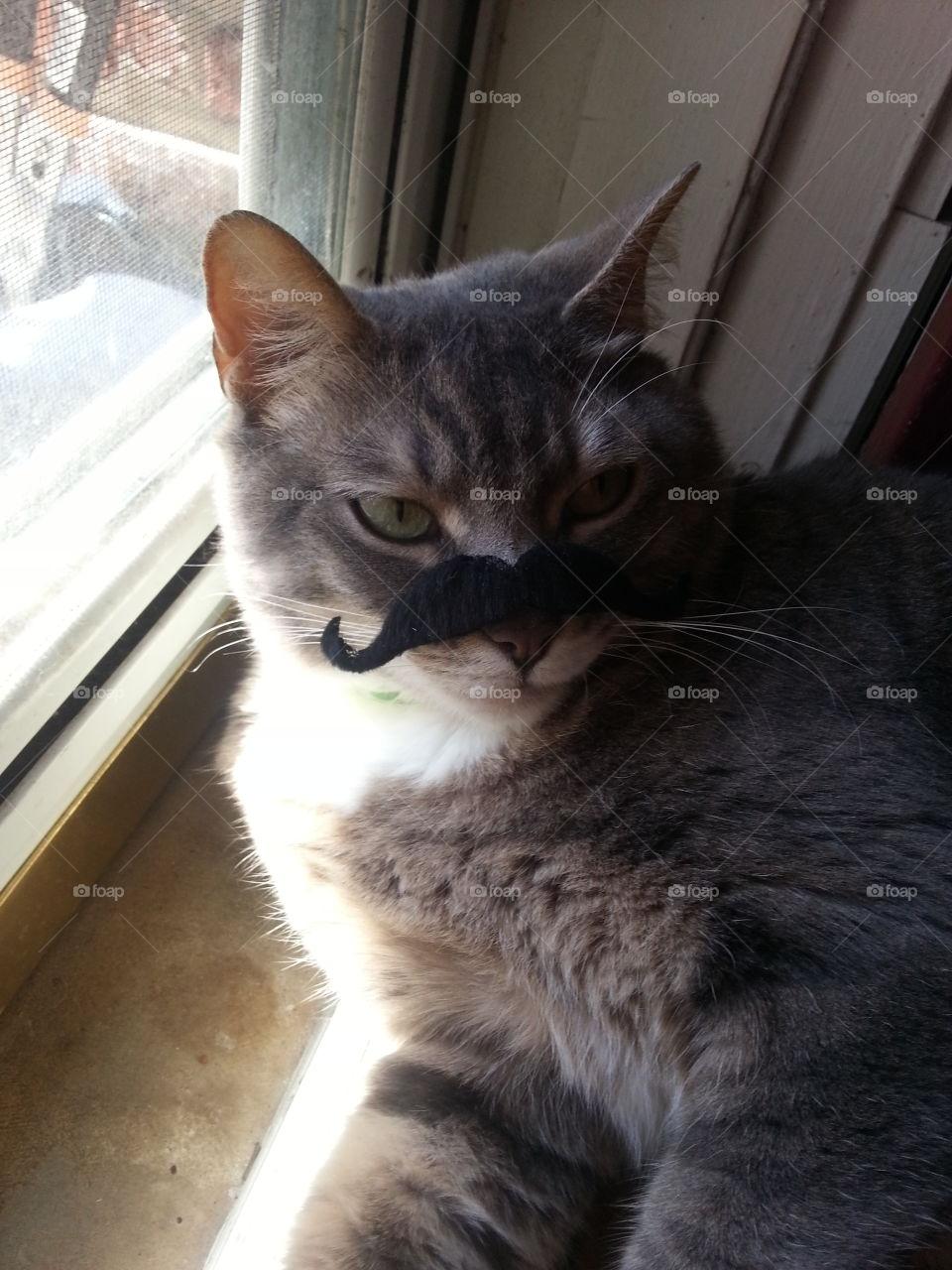 Stache Cat