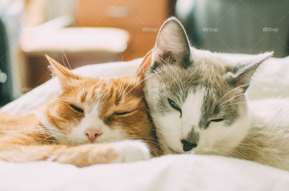 Close-up of two lazy kittens