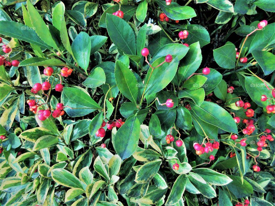 closeup of a shrub