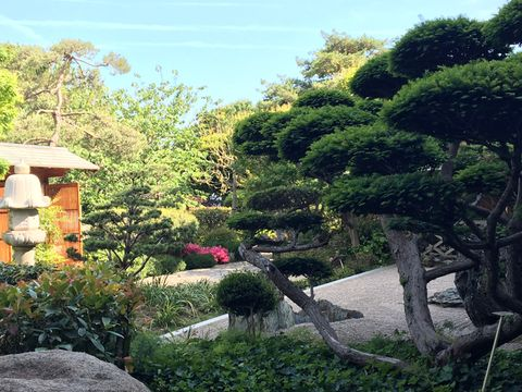 Garden, Tree, Landscape, Nature, Travel