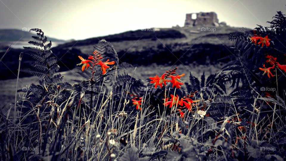 flowers garden red grass by krispett