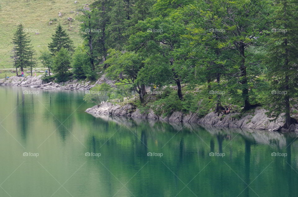 Green trees near calm lake